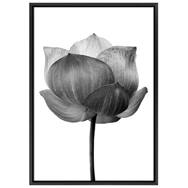 Corporate Artwork - #13 Black Lotus Vertical